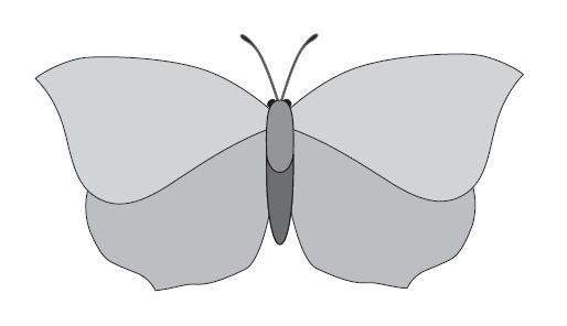 motyl - wzór